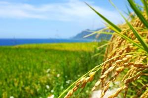 水稲除草剤の有効活用のために