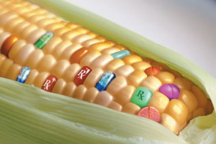 """従来の遺伝子組み換え作物とは違う? 新技術を用いた遺伝子""""編集""""作物が登場。アメリカ農務省は規制しない方針"""