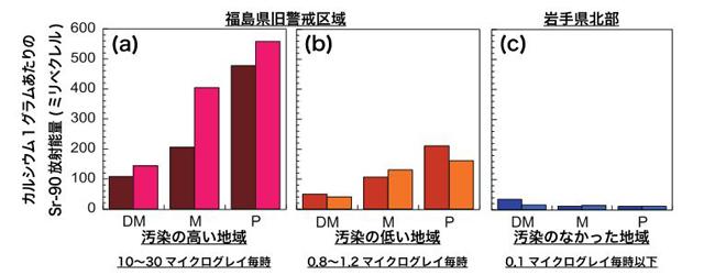 東北大、福島原発事故の被災牛の歯から放射性ストロンチウムを検出