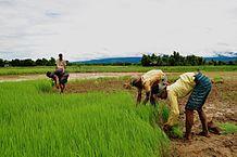 農業人口 2050年に半減へ 85歳以上3割 自民試算