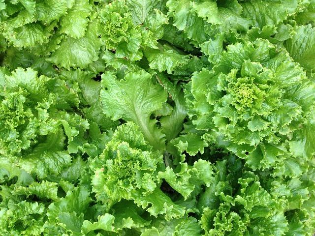 野菜高騰、家計を直撃 日照不足で供給量減(追記あり)