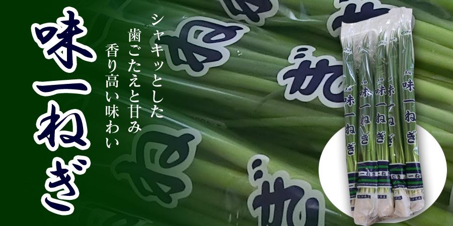 「味一ねぎ」商標使わせず 公取委、県農協立ち入り(11/4追記)
