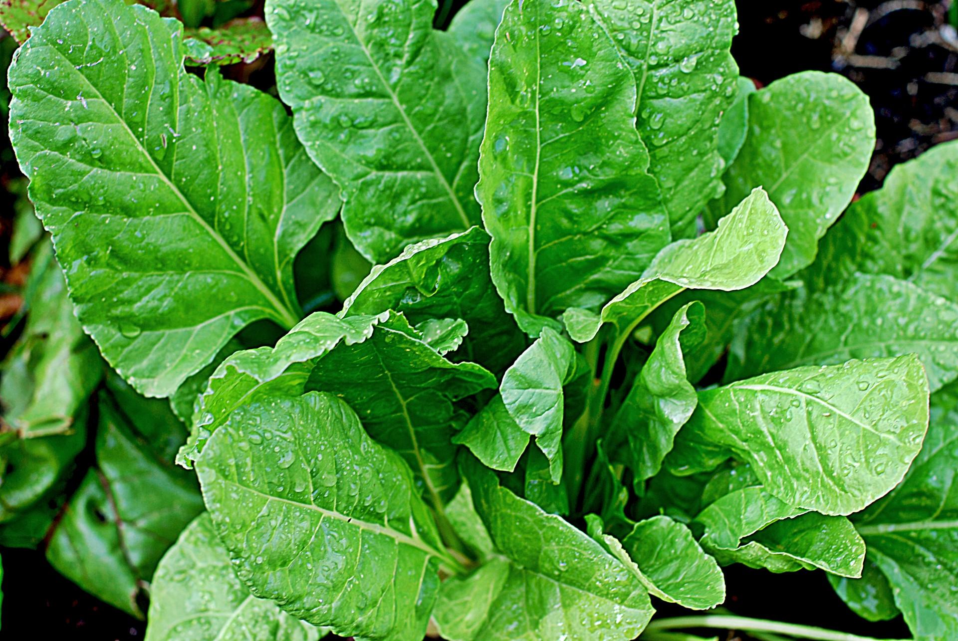 日本人だけが知らない!日本の野菜は海外で「汚染物」扱いされている、という記事について