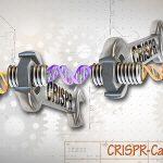 NHGRIによるCRISPR/Cas9のメージ図(Wikipediaより)